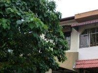 terraced house for sale 4 bedrooms 47301 petaling jaya myla65778369